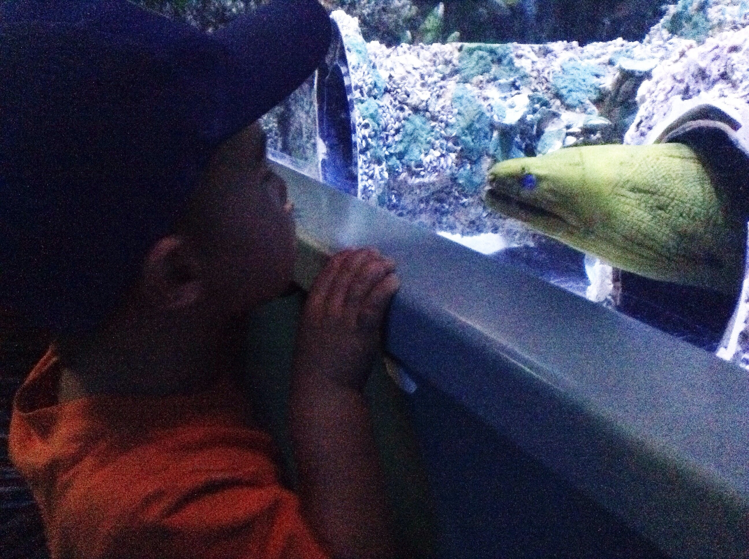 eel watching