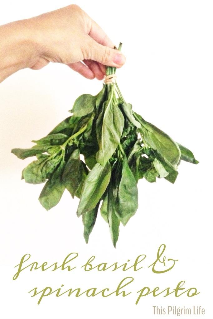 Fresh Basil and Spinach Pesto