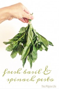 Fresh Basil and Spinach Pesto