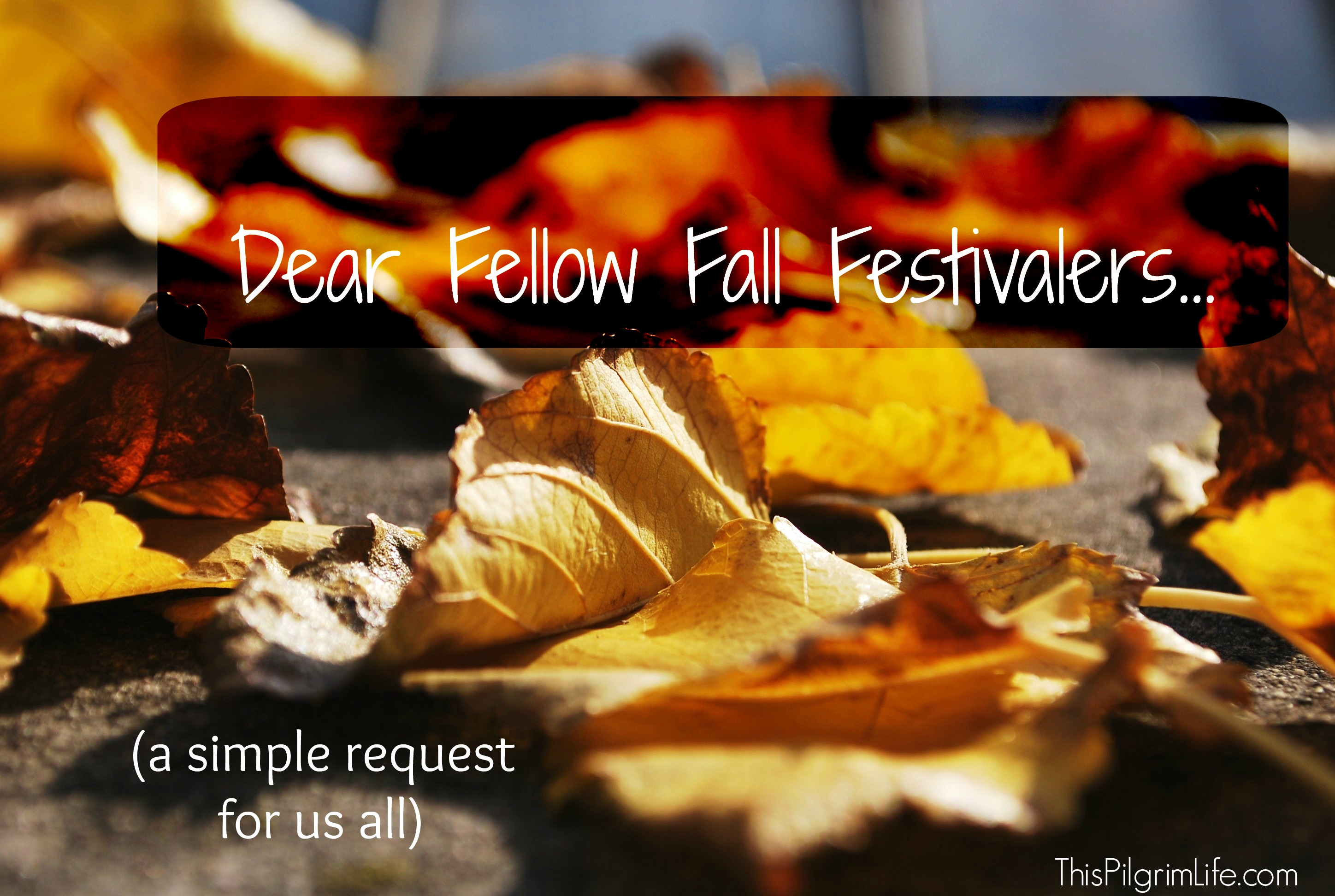 Dear Fellow Fall Festivalers