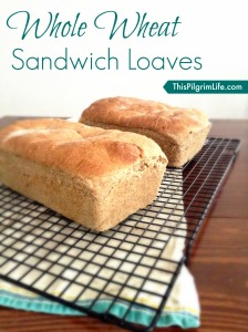 Whole Wheat Sandwich Loaves