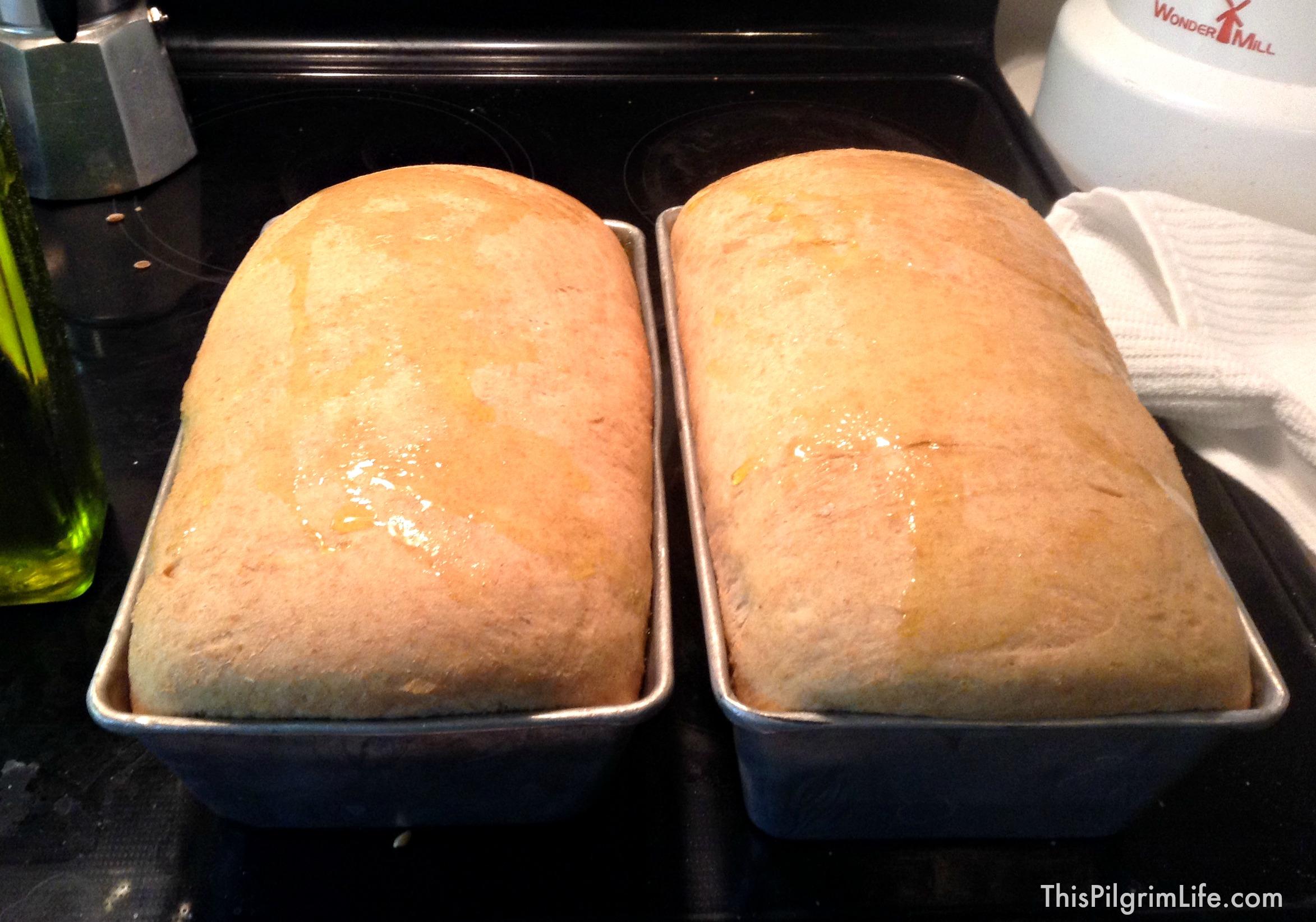 Whole Wheat Sandwich Loaves