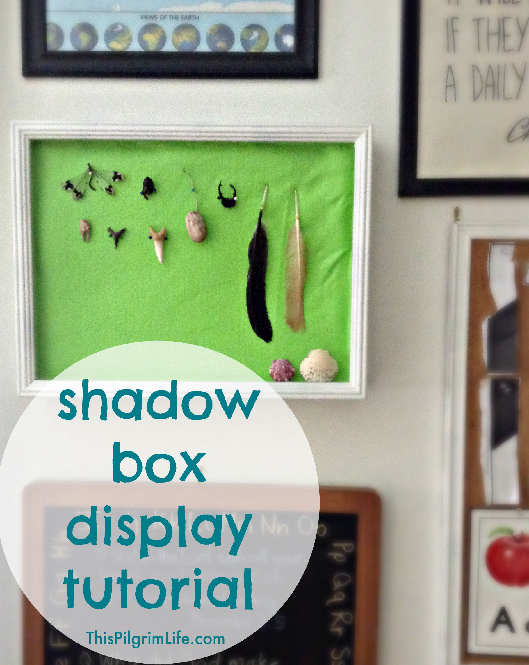 Get the bugs and outdoor treasures off the floor and counters and bookshelves! Follow this simple tutorial to turn a shadow box into a display for nature finds!