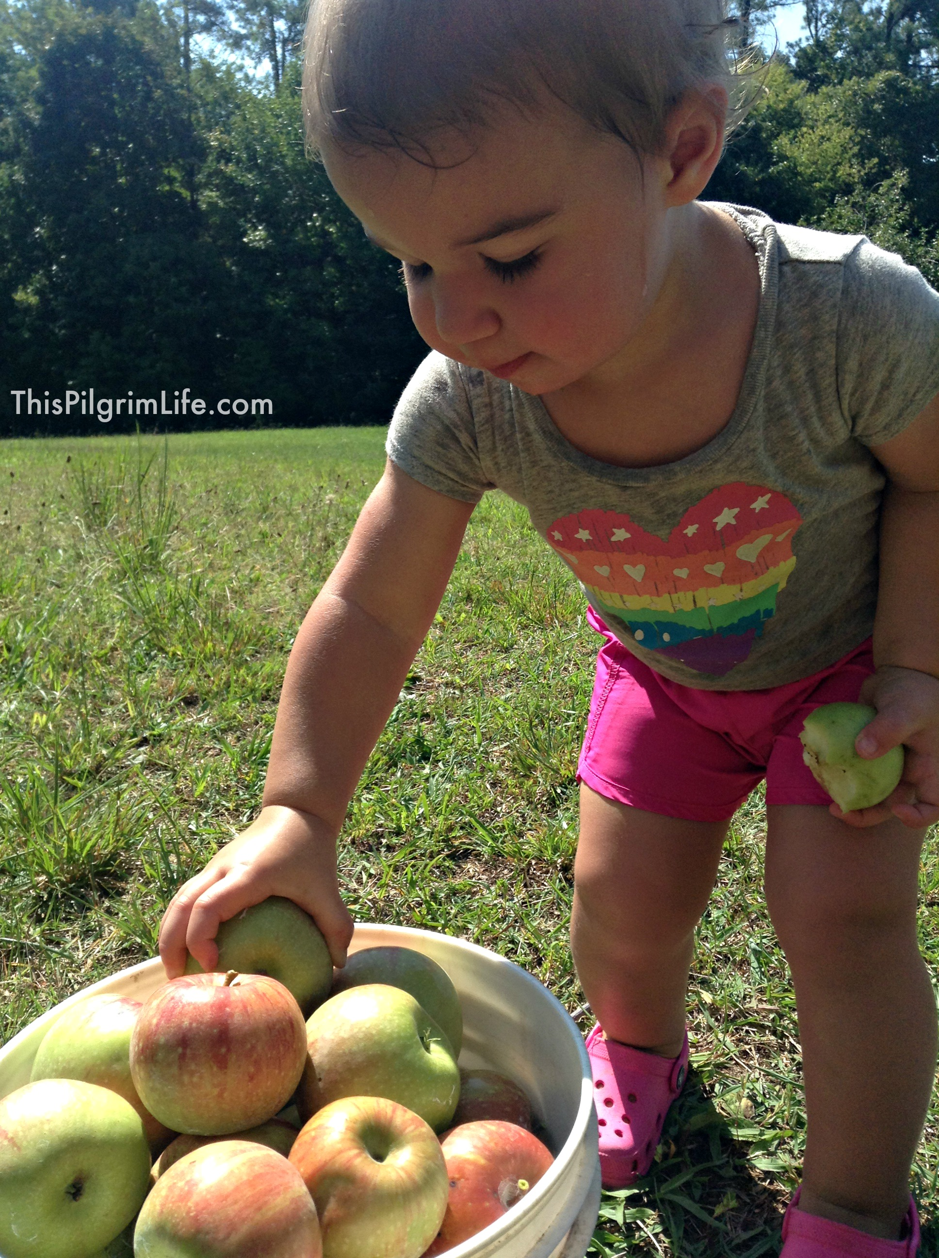 """Kids in the Kitchen"" extends to apple orchards too!"