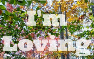 What I'm Loving– Edition 7