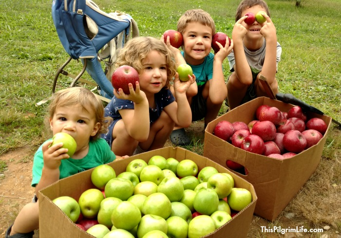 It is apple picking season! Take advantage of this amazing, versatile fruit while it's in season with these delicious apple recipes for eating, snacking, and sipping!