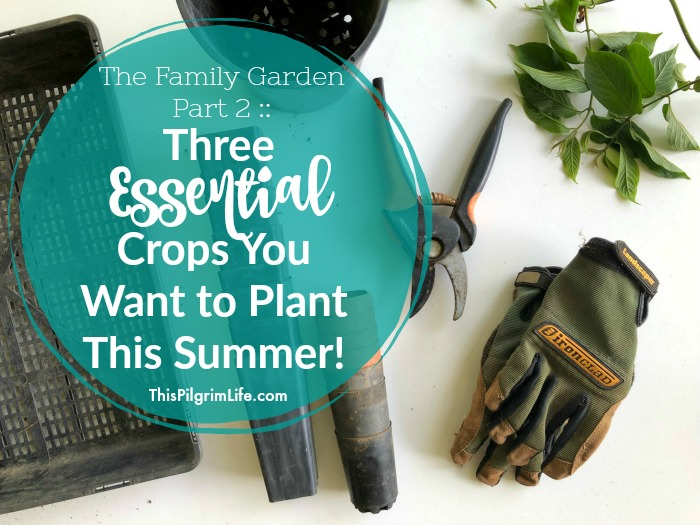 Are you planting a garden this summer? Even if you keep your garden small, you definitely want to include these three essential summer crops!