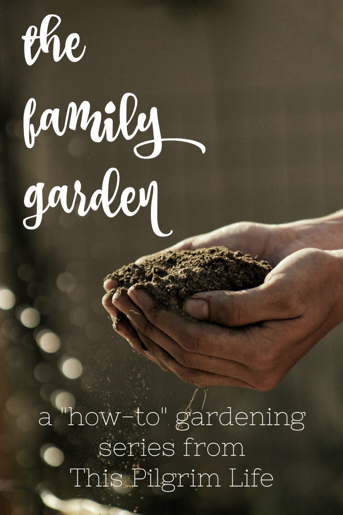 Join me for a multi-part series discussing the most important things you need to know about keeping a family garden! From planning a garden, keeping a kitchen garden, casting a long-term vision, how to handle weeds and bugs, managing the harvest, and tips for gardening with kids!