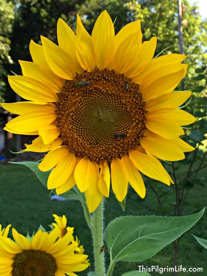 pollinator garden pic3