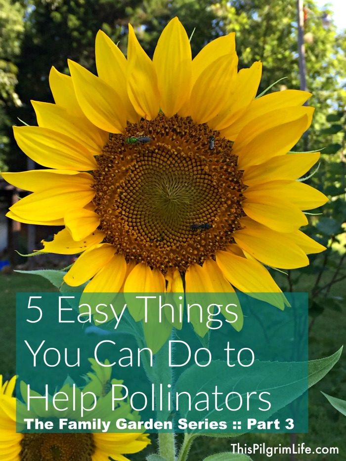 5 Easy Things You Can Do to Help Pollinators :: The Family Garden, Part 3