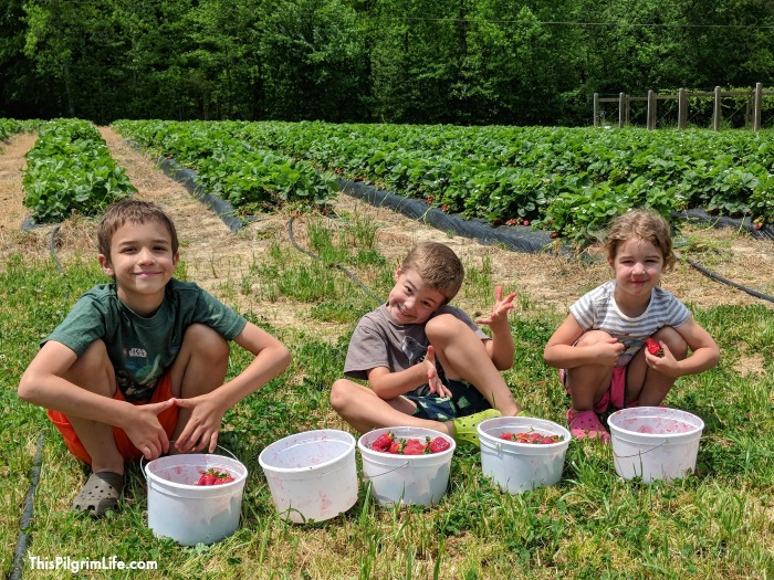 strawberry picking 2018