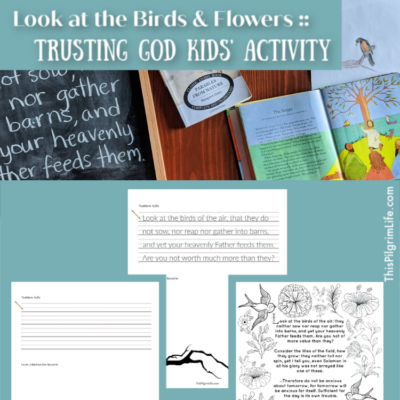 Look at the Birds & Flowers :: Children's Lesson on Trusting God
